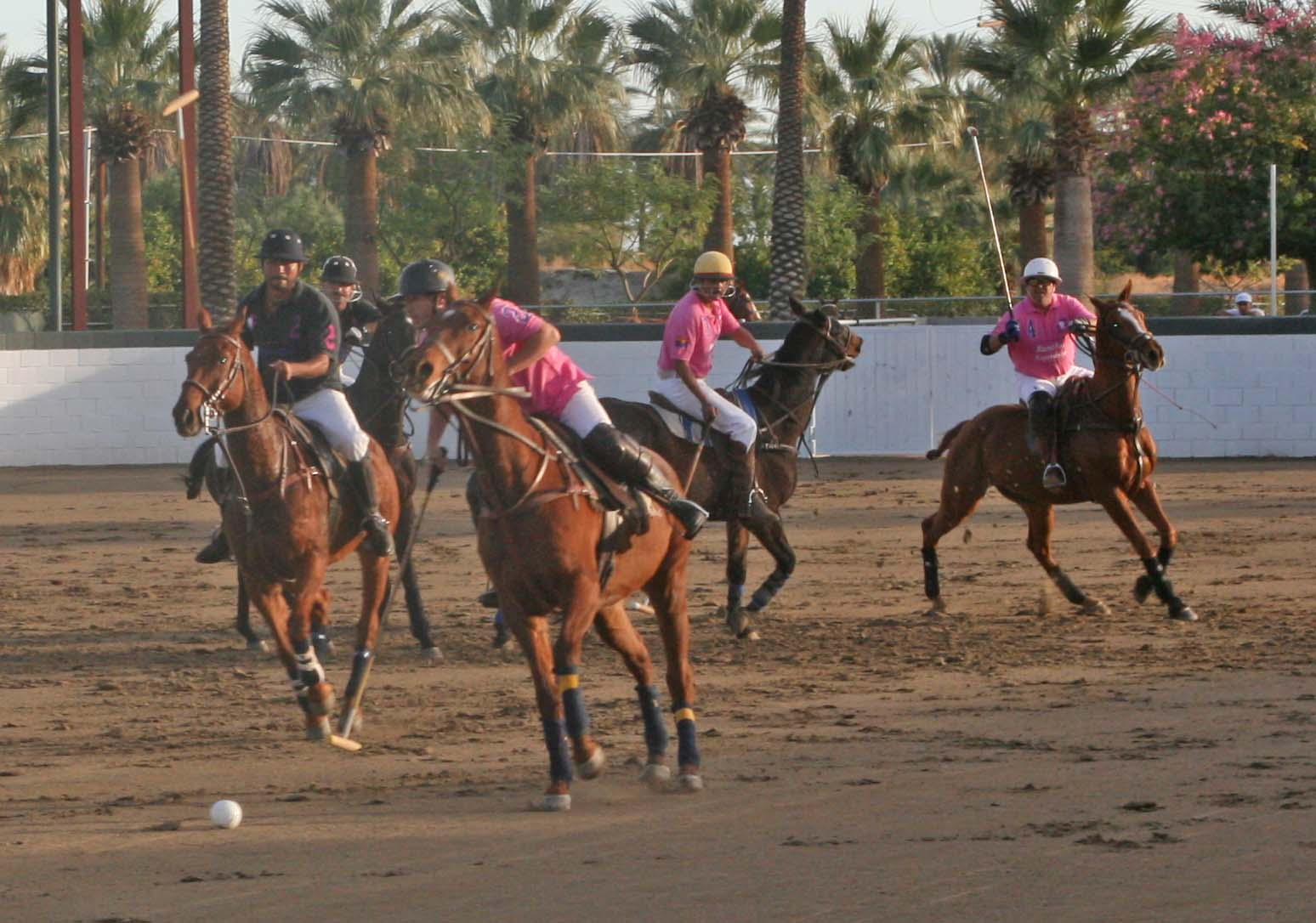 What is Arena Polo?