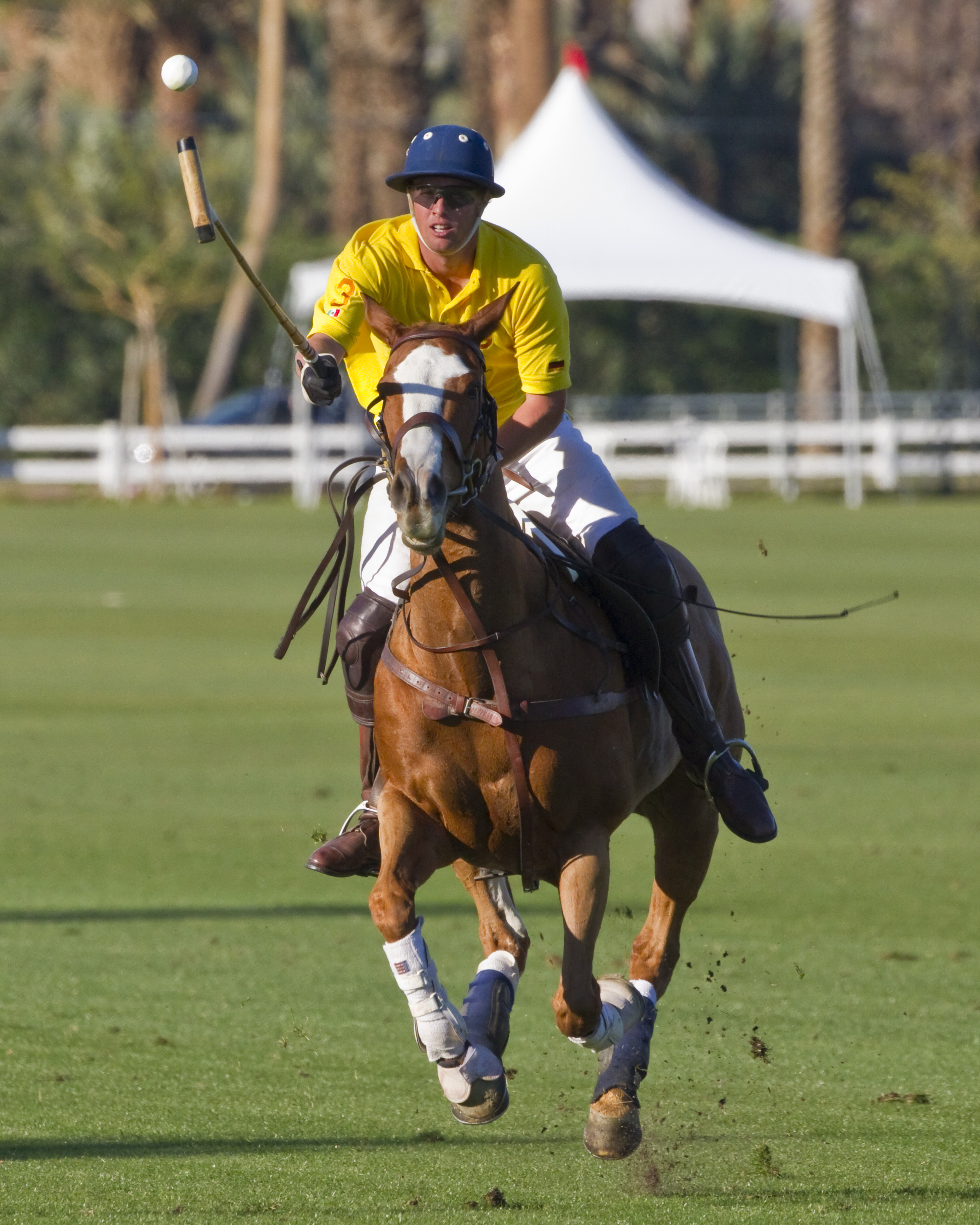 The Polo Handicap
