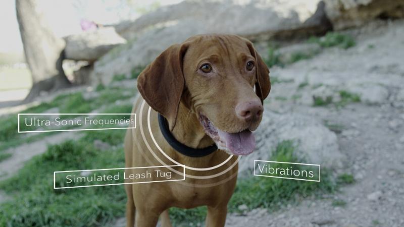 Patrick Perrine's dog Riley models the DogTelligent Connected Collar(TM) (PRNewsFoto/DogTelligent)